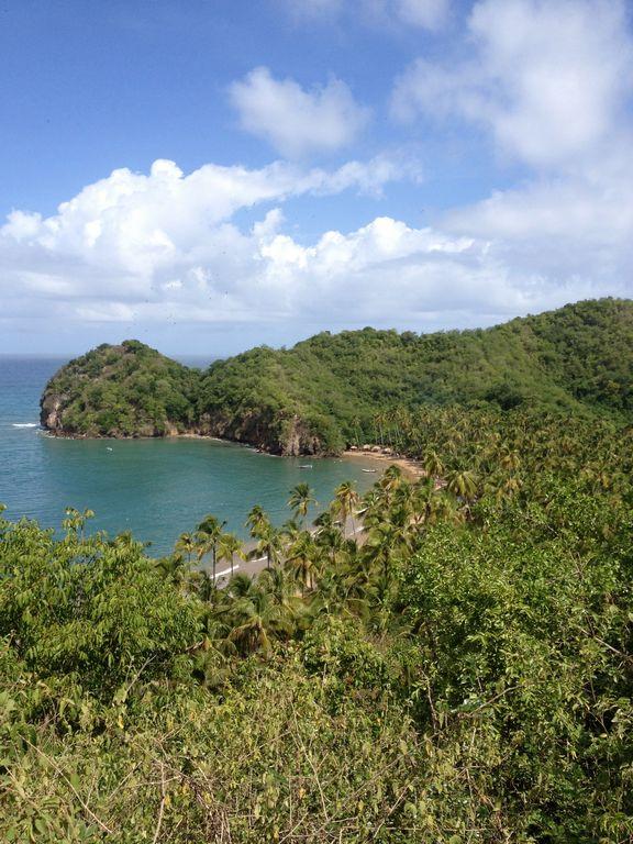rainforest near cocoa bean plantatio