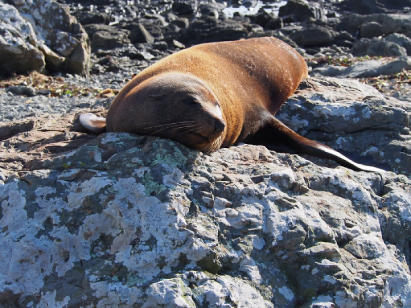 seal in hot environment