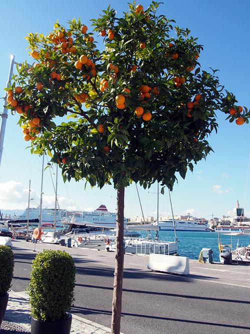malaga oranges